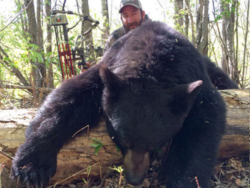 bear-slider1