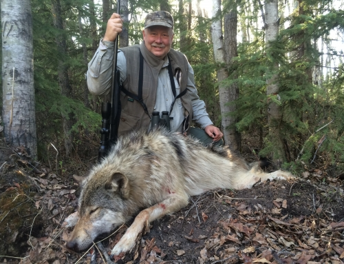 Wolf / Coyote – 2015